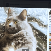 Meowsterpiece Monday: Cats and Facebook