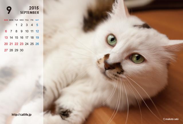 CatLife卓上カレンダー2015