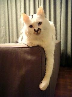 image/catlife-2005-11-02T17:23:47-1.jpg