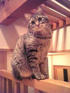 image/catlife-2006-03-26T23:28:25-1.jpg