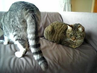 image/catlife-2006-04-20T10:00:43-1.jpg