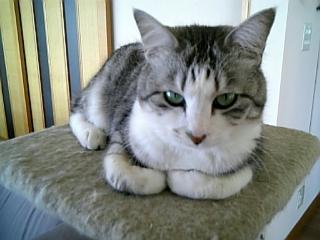 image/catlife-2006-04-25T09:55:22-1.jpg