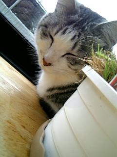 image/catlife-2006-04-26T09:27:46-1.jpg