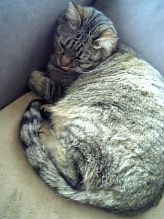 image/catlife-2006-04-26T15:51:42-1.jpg