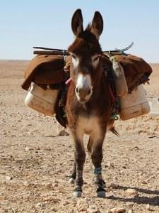 donkey-534906_640