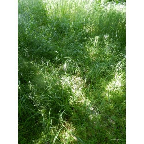 Medium Crop Of Grass On Steroids