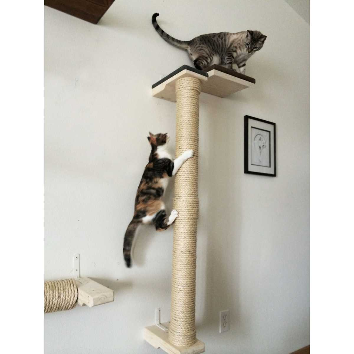 Indoor Cat Climbing Tree Catastrophicreations Vertical Wall Mounted Sisal Cat Pole