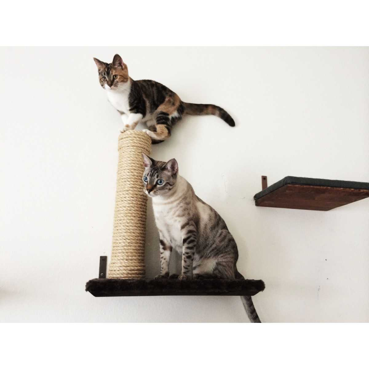 Outdoor Cat Shelves Catastrophicreations Sisal Post On 18 Inch Cat Wall Shelf