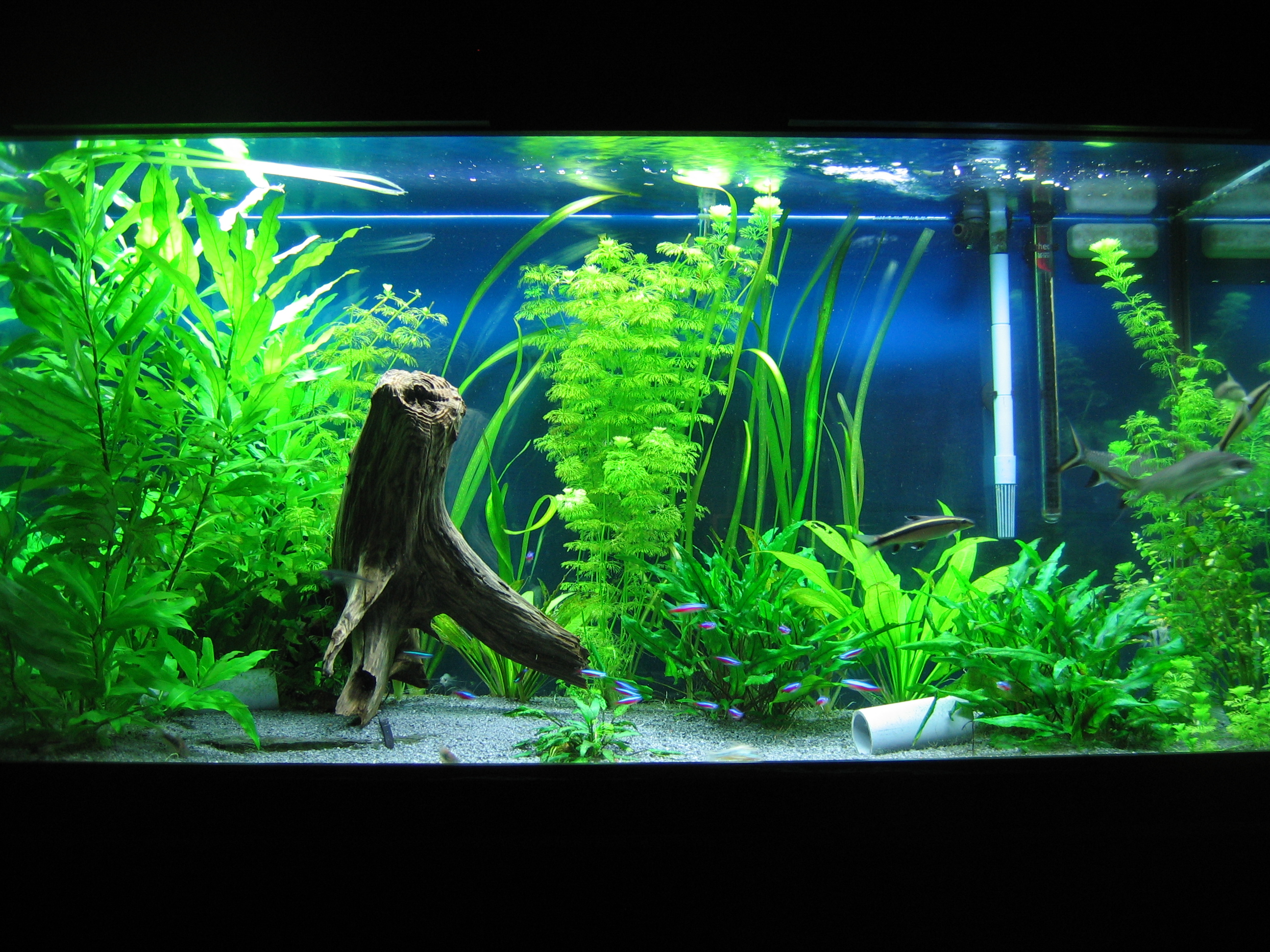 Decoration Interieur Aquarium Aquarium Decorations Interior Decorating Accessories