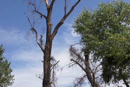 Arborist and park staff protect nesting woodpeckers from destruction
