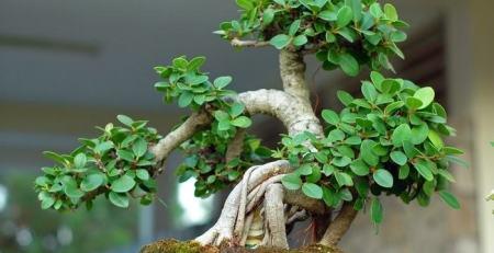 Chính sách cho thuê cây cảnh