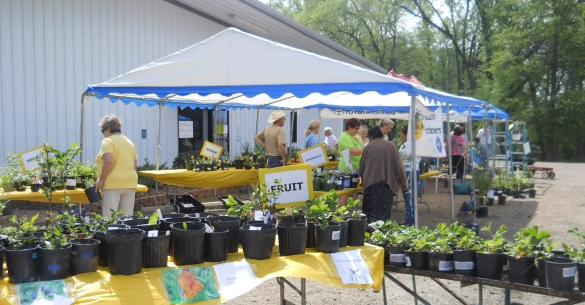 annual_plant_sale_expo