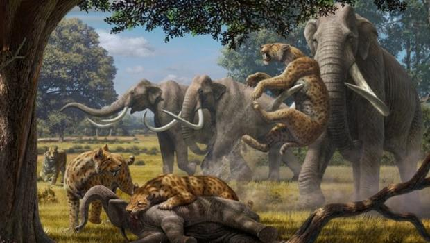 Saber Tooth Tiger 3d Wallpaper Ancient Super Predators Could Take Down A Mammoth Cbs News