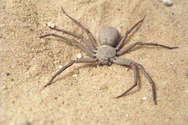 13 Spider in black - The world\u0027s most dangerous spiders (WARNING