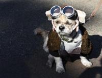 Dog parade - Dog costume Halloween parade in New York City ...