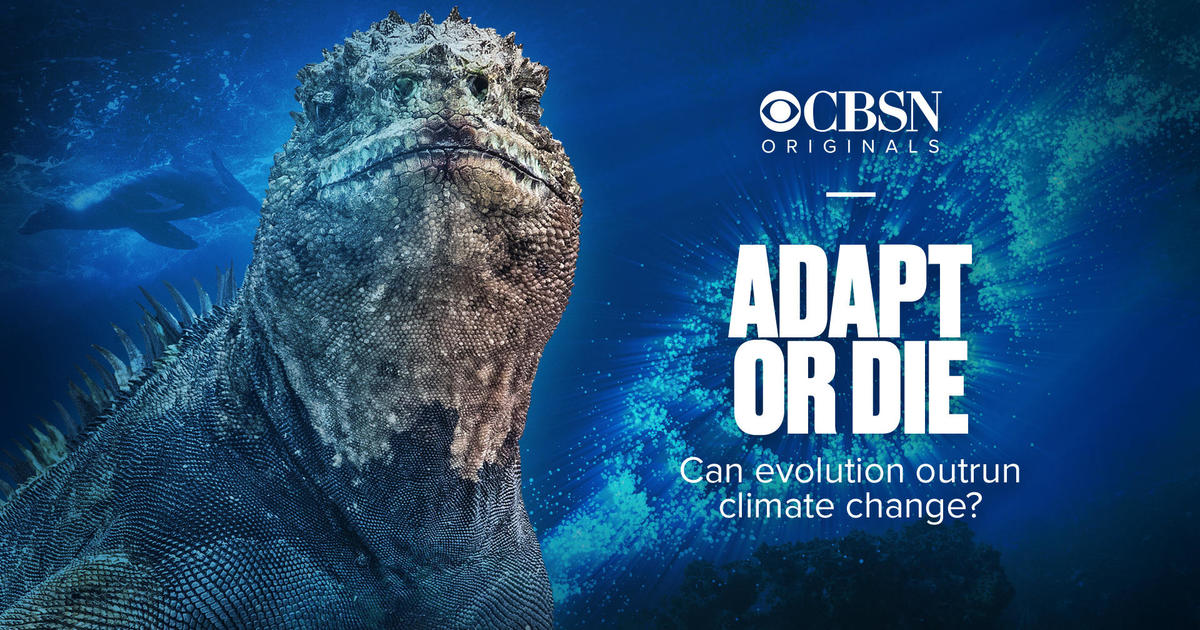 Adapt or die Can evolution outrun climate change? - CBSN Originals