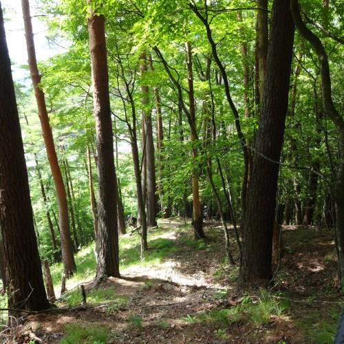 Learn Trail