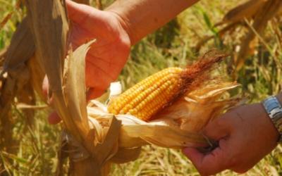 Oposición a la aprobación de la Ley de la Revolución Productiva Comunitaria Agropecuaria