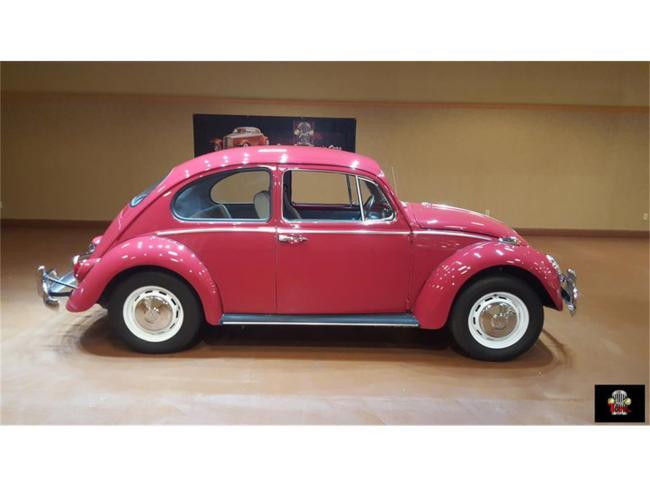 1966 Volkswagen Beetle in Orlando, Florida