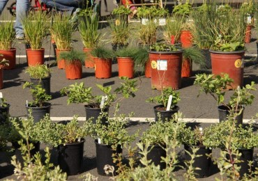 CCWD Will Host Native Plant Sale April 16