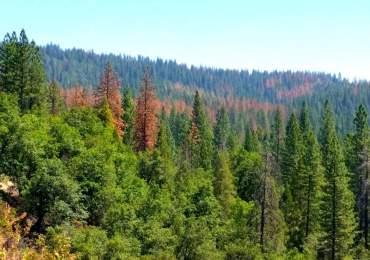 Tree Mortality in Calaveras County: CCWD's Role