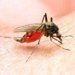Dangers-and-Symptoms-of-West-Nile-Virus--150x150
