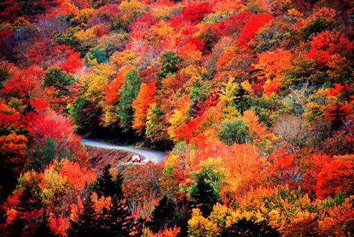 Autumn Fall Leaf Car Wallpaper New England S Fall Foliage The Ultimate Guide For Irish