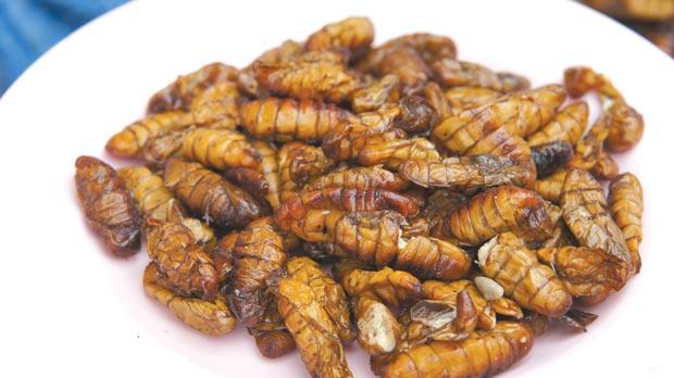 Image result for locusts meal
