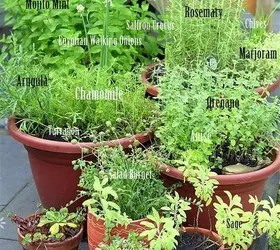 Grow Your Own Perennial Container Herb Garden Hometalk