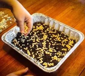 How To Grow Popcorn Shoots | Hometalk