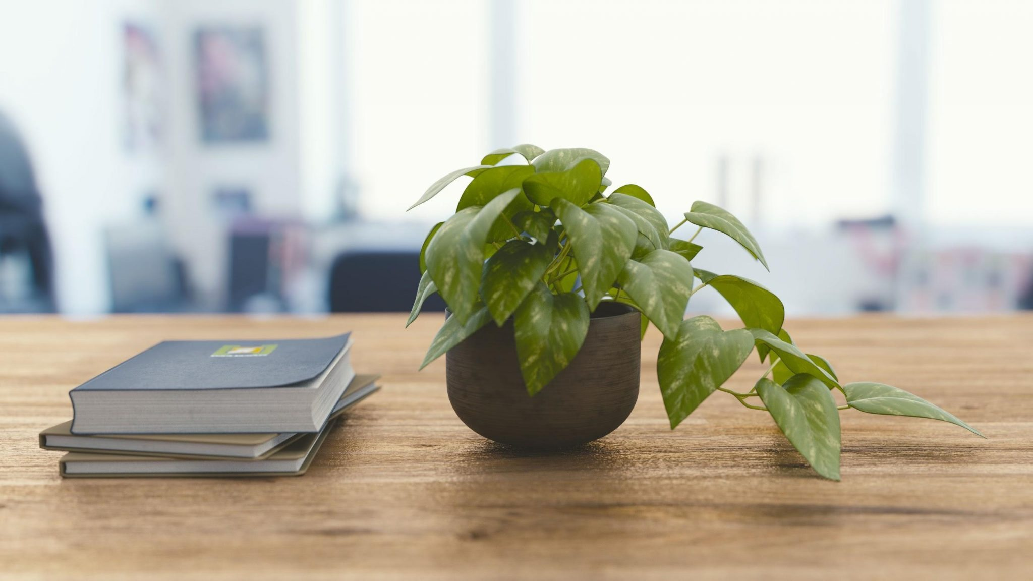 Indoor Plants For The Office How To Improve Indoor Air Quality With Plants Foobot