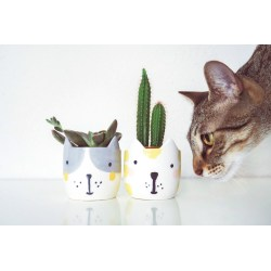 Small Crop Of Are Succulents Poisonous To Cats