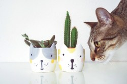 Small Of Are Succulents Poisonous To Cats