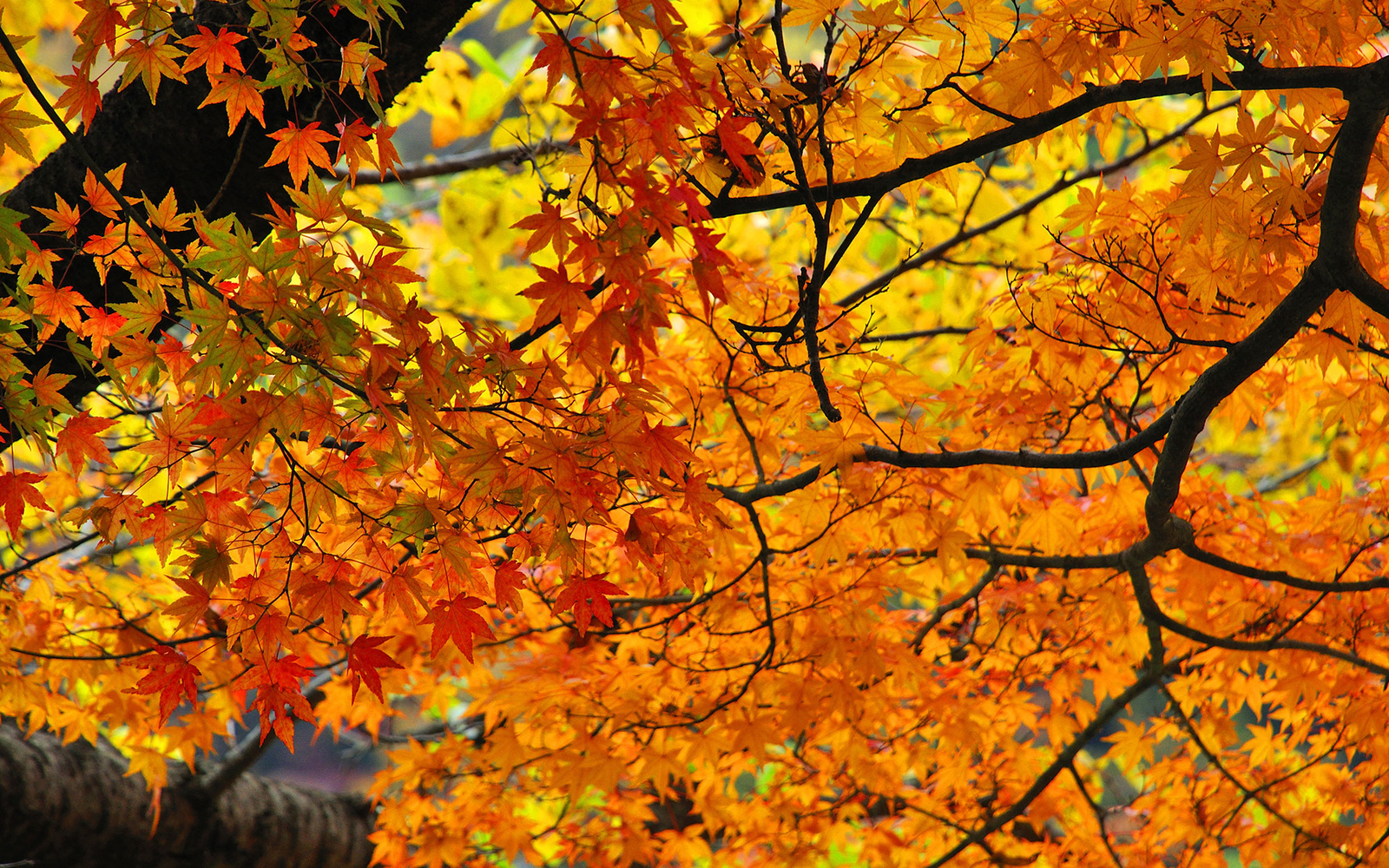 Fall Wallpaper Road How To Have The Best Fall Ever Travel Leisure