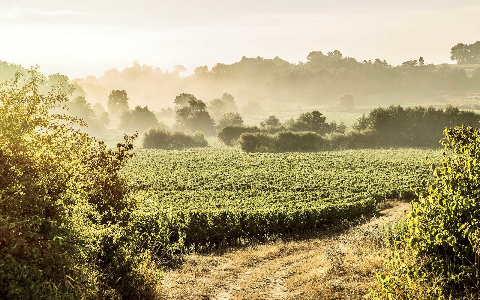 Black List Bordeaux Why Bordeaux Should Be Your Next Vineyard Vacation Travel Leisure