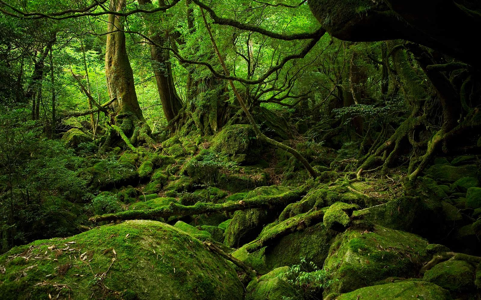 Why The Japanese Are Taking Forest Baths And Why You