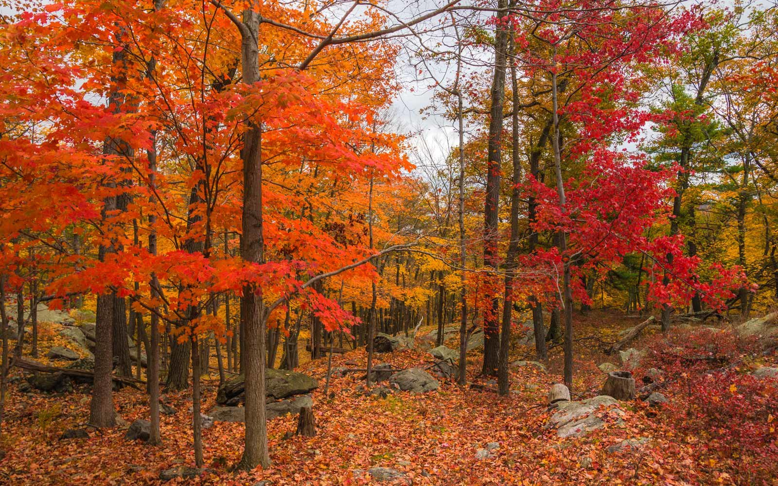 Fall Leaves Wallpaper Powerpoint Background Beautiful Fall Leaves Around The World Travel Leisure
