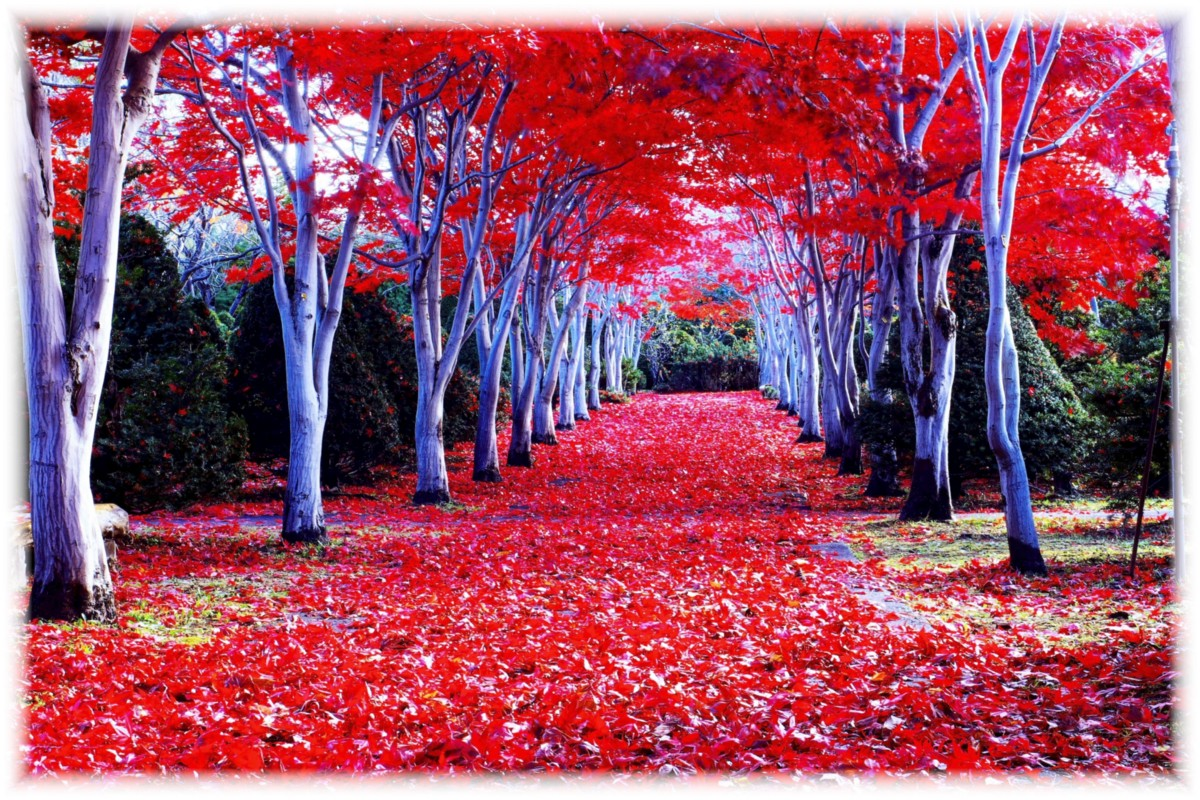 Mountain View Wallpaper Hd 5 Best Autumn Leaves Spots In Hokkaido Japan Travel