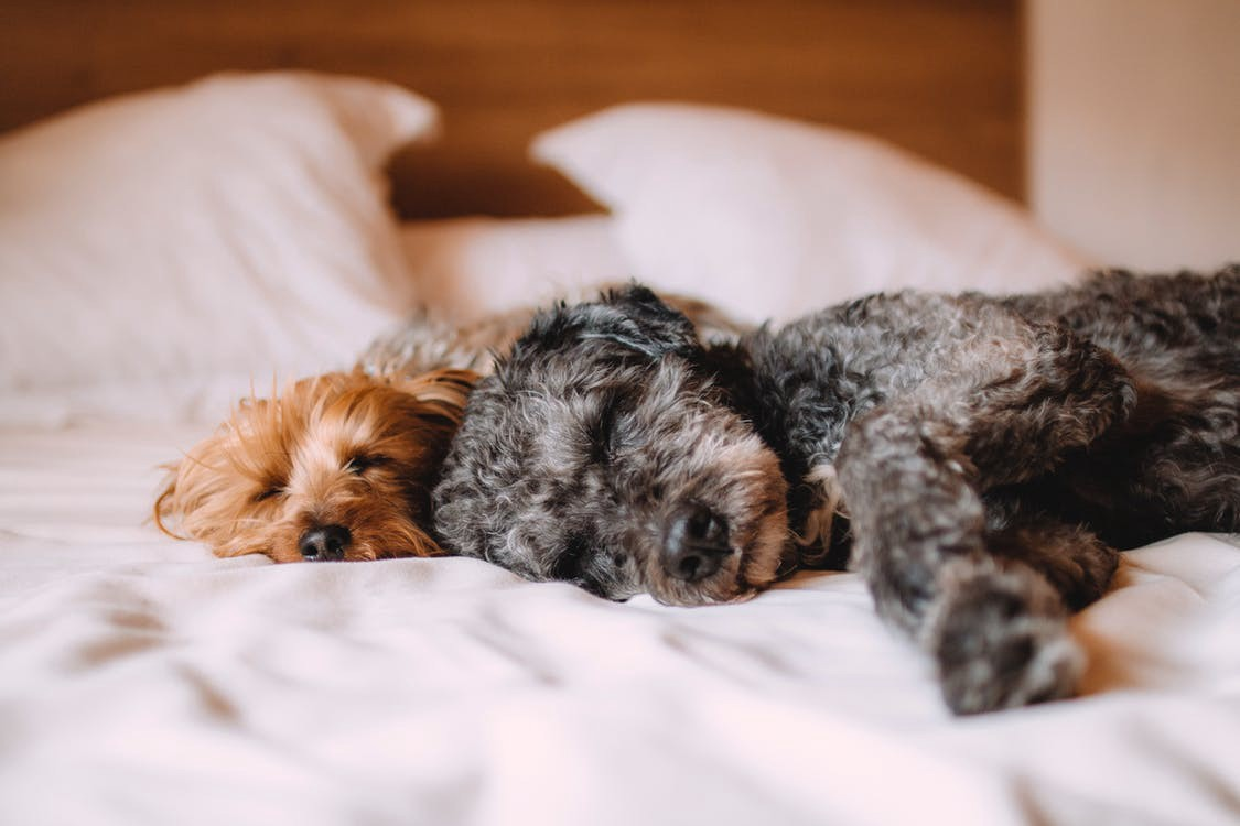 Memory Foam Versus Latex Does Your Dog Deserve A Memory Foam Or Latex Mattress
