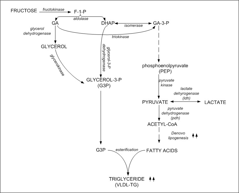 The Science Behind Fat Metabolism \u2013 KetoSchool