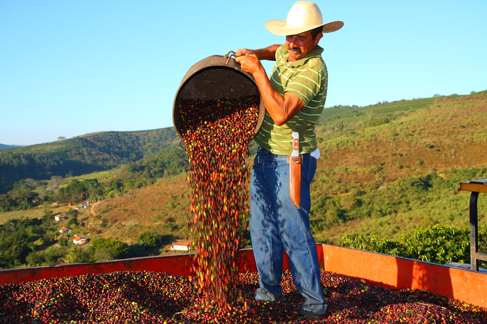 Coffee Garden Jobs Spilling The Beans 29 Facts About Coffee In Brazil