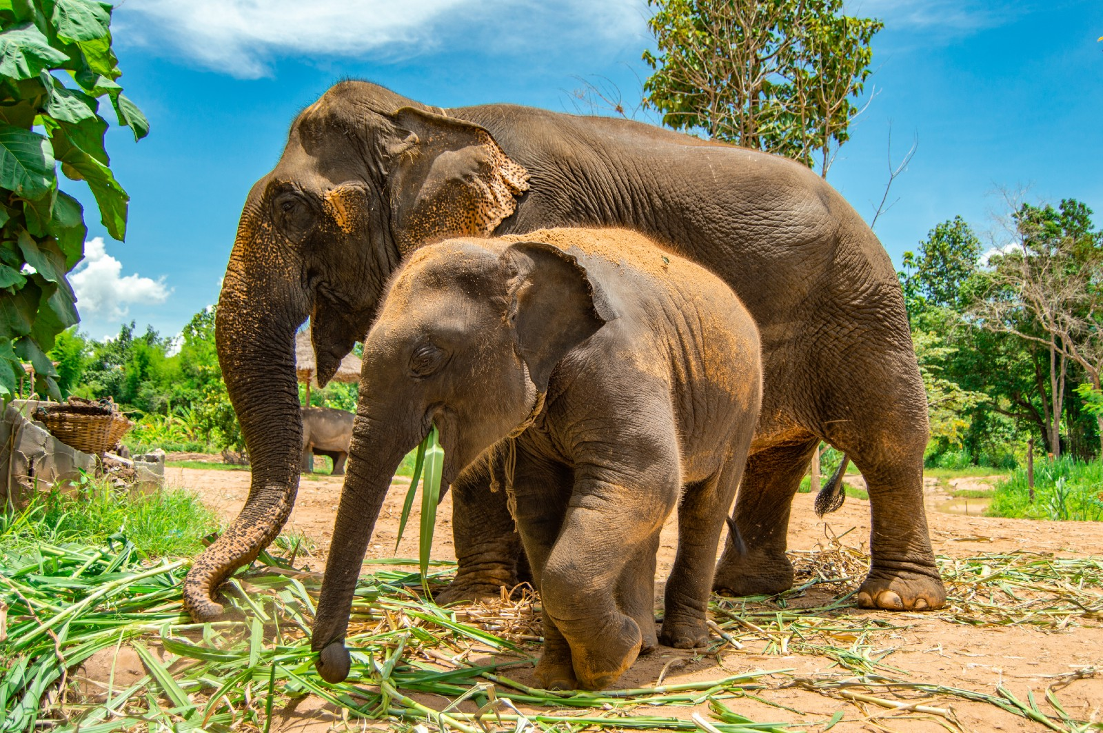 Photos éléphants What They Don T Tell You About Elephant Sanctuaries In Thailand