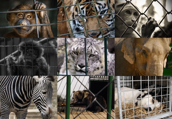Should Wild Animals Be Used For Entertainment At Circus Or
