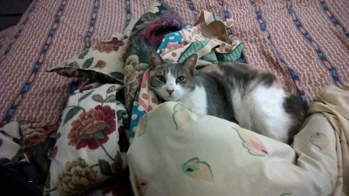 Medium Of Cat Not Eating Or Drinking