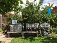 Backyard Aquaponics in The Netherlands  Age of Awareness ...