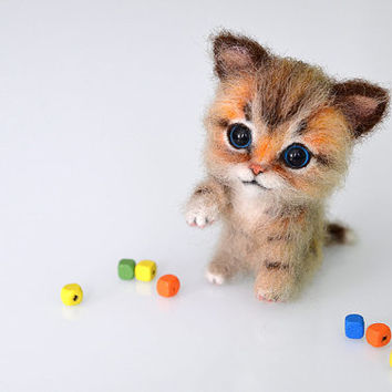 Cute White Kittens With Blue Eyes Wallpaper Best Tiny Kittens Products On Wanelo