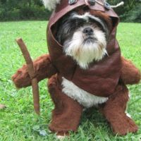Ewok Star Wars Dog Halloween Costume from
