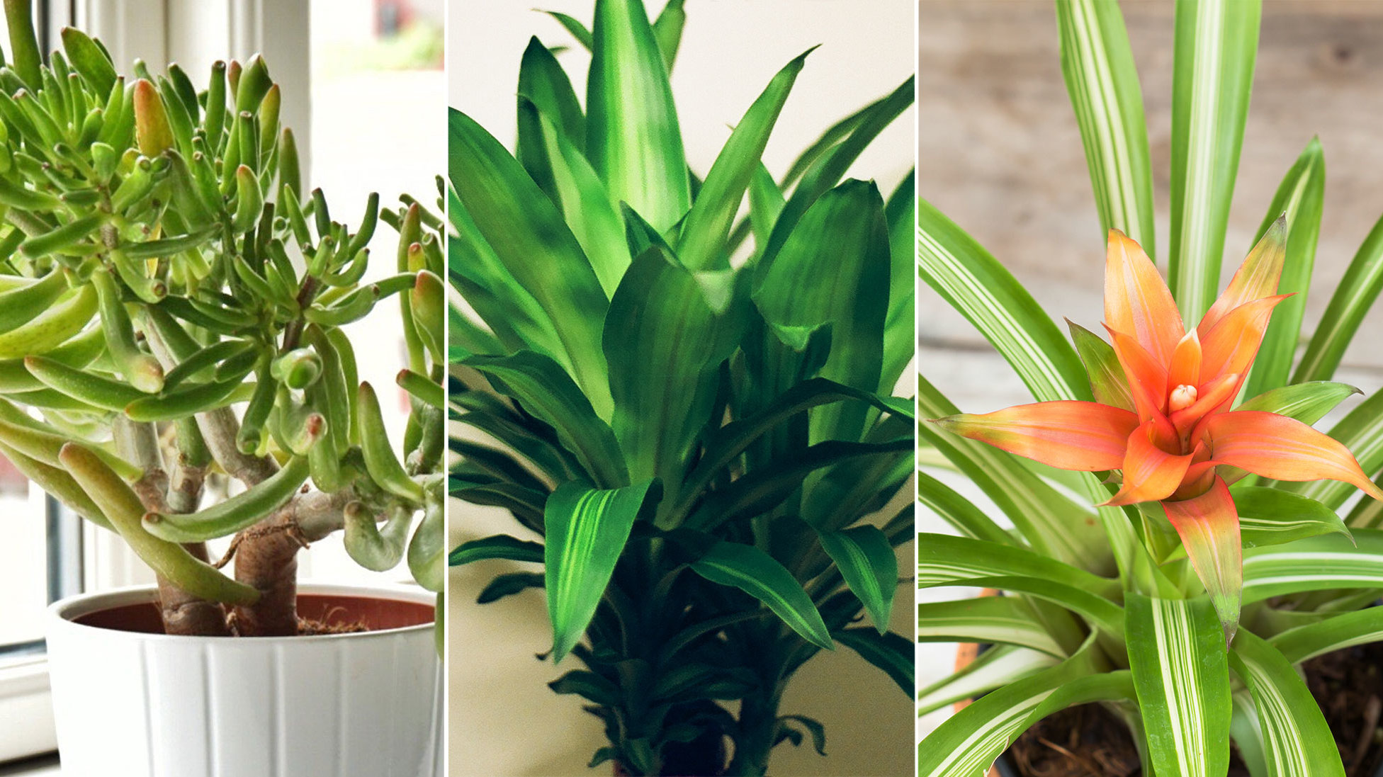 Indoor Plants For Home 5 Plants That Can Help Purify Indoor Air
