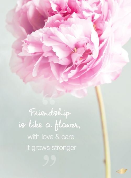 Peony Love Quote Wallpaper Friendship Is Like A Flower With Love Amp Care It