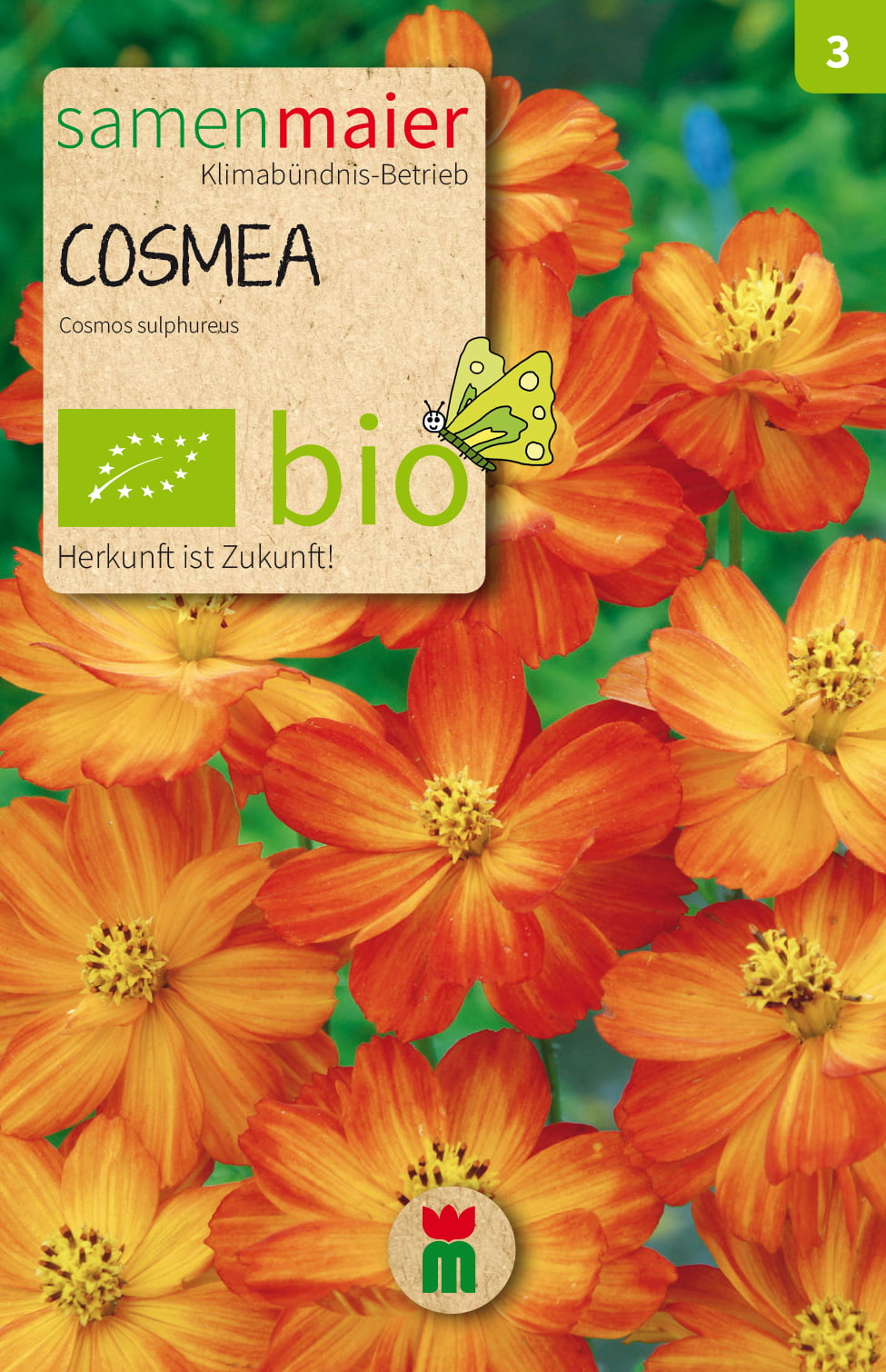 Cosmea Samen Samen Maier Organic Cosmea - Orange, 1 Package - Bloomling Uk